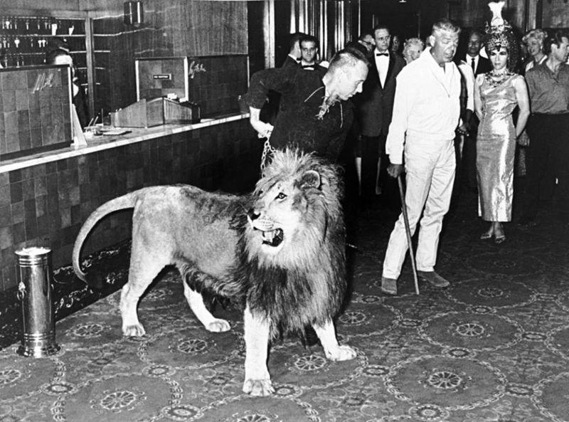 LION ZAMBA BENSON LOBBY