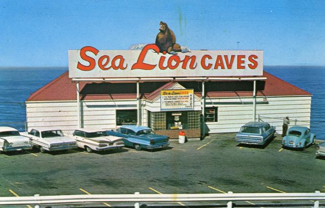 Sealion caves