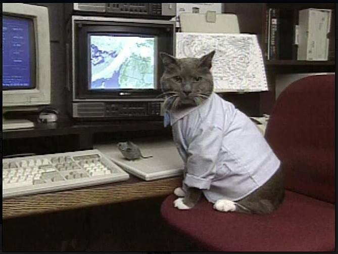 Bob w cat